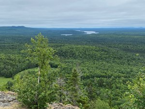 FOREST LAND FOR SALE MAINE