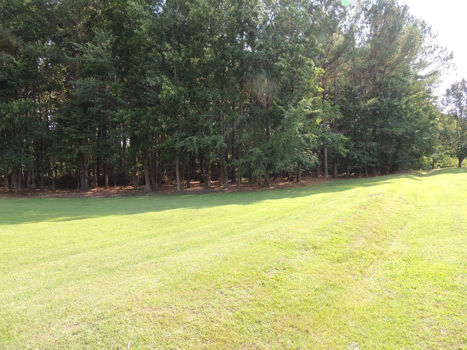 ACREAGE TO BUILD A HOME ON IN ADAMSVILLE TN