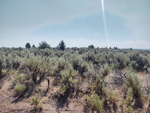 BUILDABLE +/- 1 ACRE LOT WITH POWER NEARBY