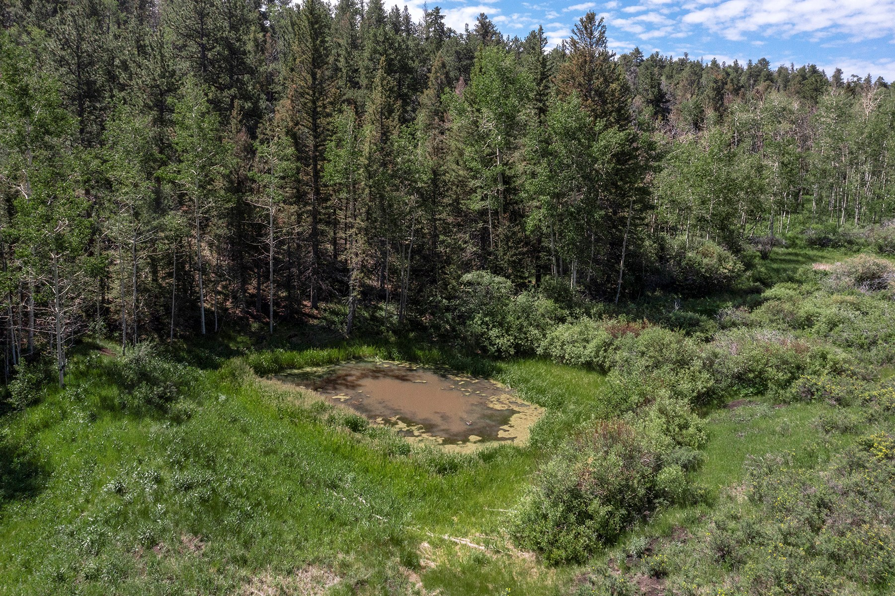 Secluded Colorado Mountain Five Acre Land