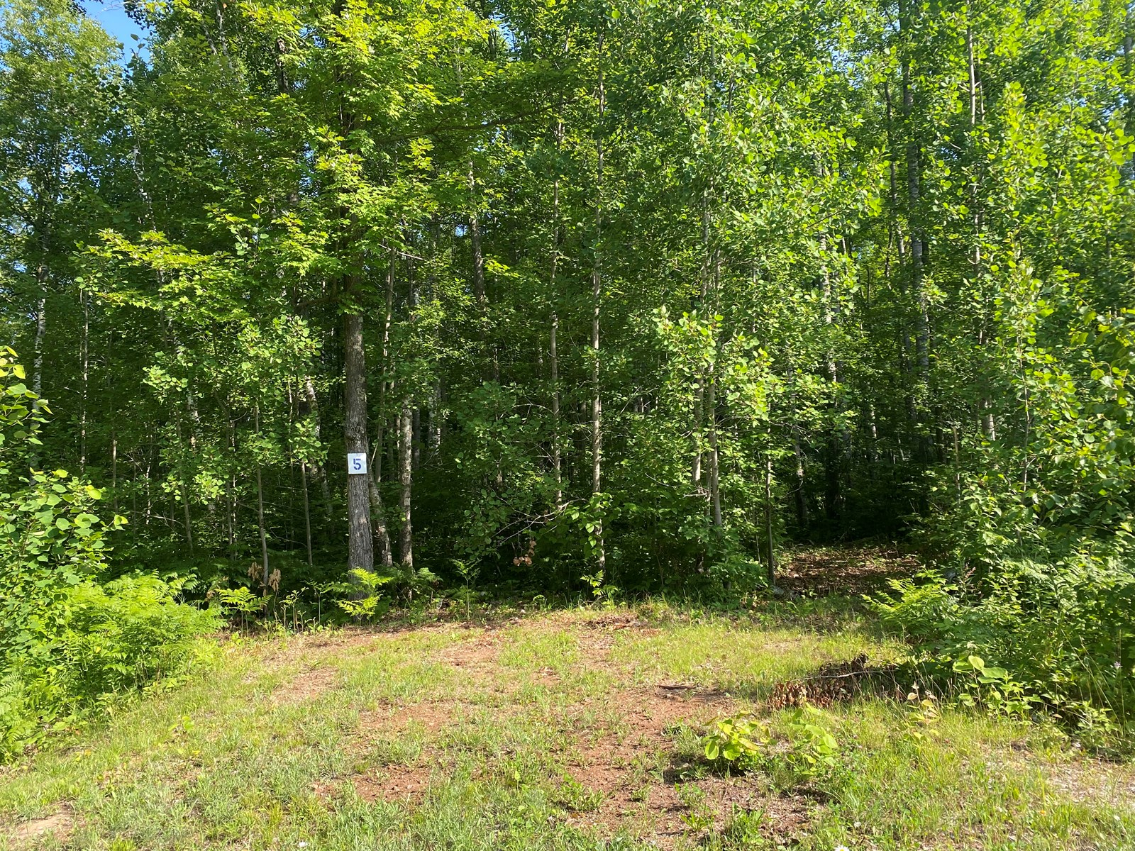 Ready-To-Build 2.66 Acre Lot For Sale In Sandstone MN