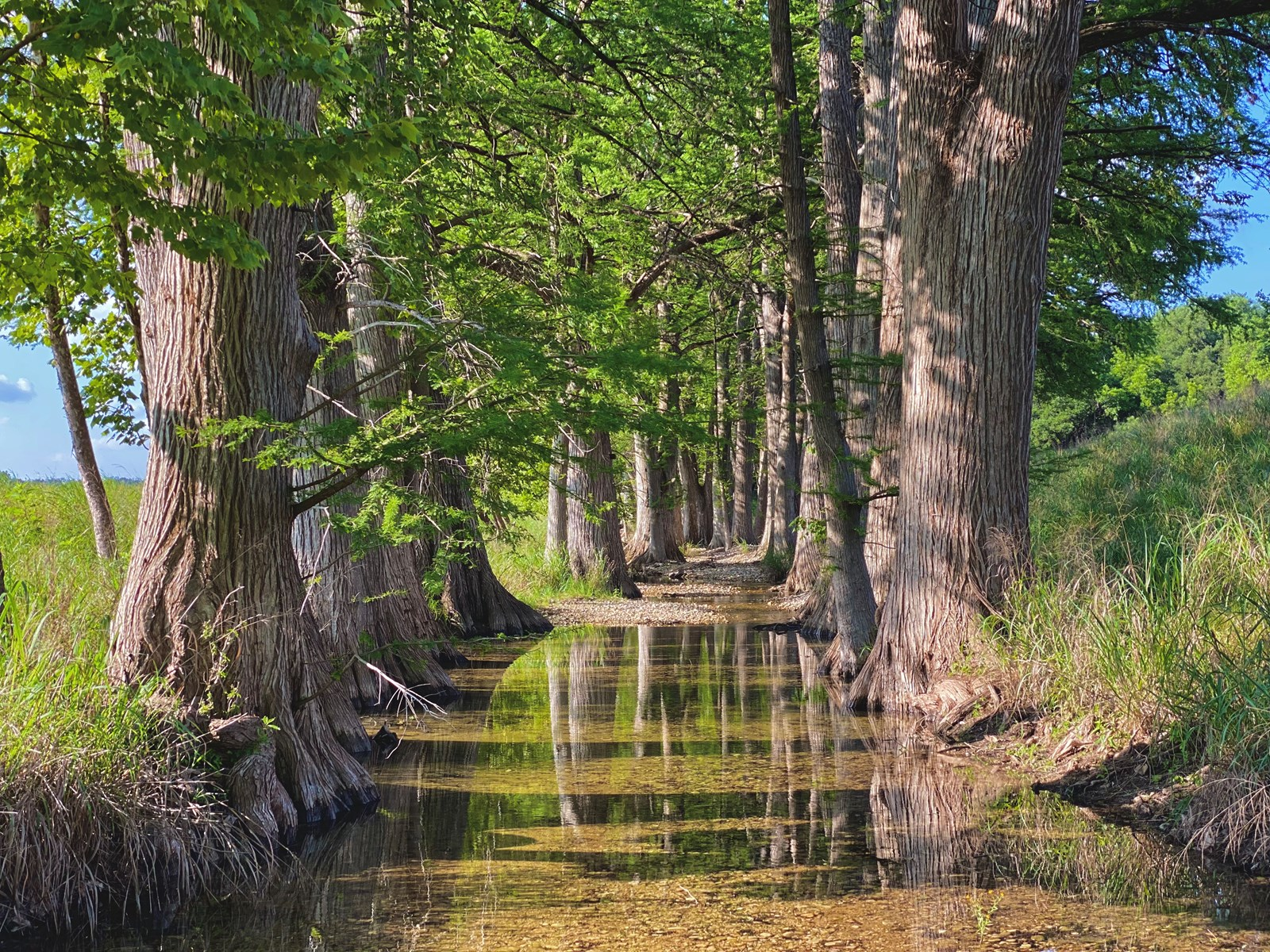 Land for Sale in Sisterdale, TX - Kendall Co.