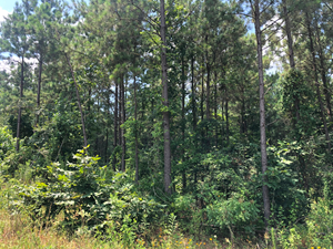 EAST TEXAS TIMBERLAND HUNTING AND INVESTMENT TRACT