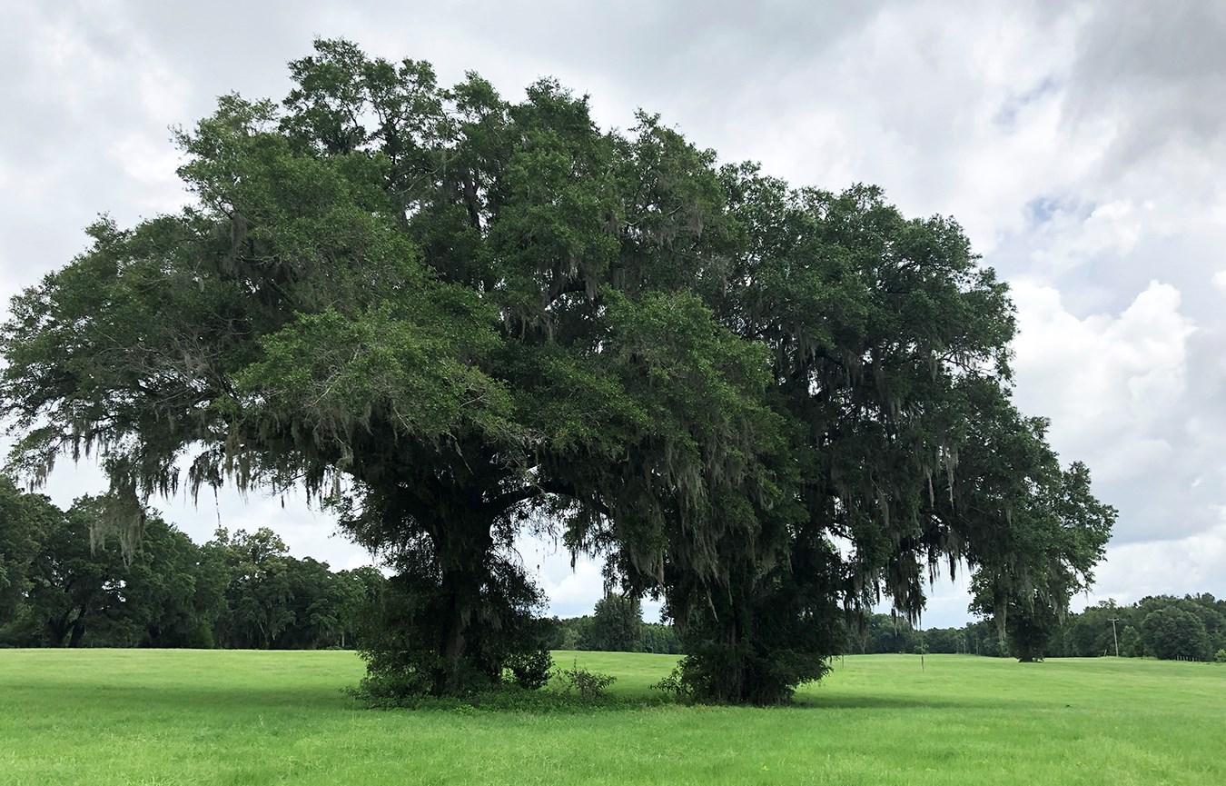 NORTH FLORIDA ACREAGE FOR SALE IN FORT WHITE