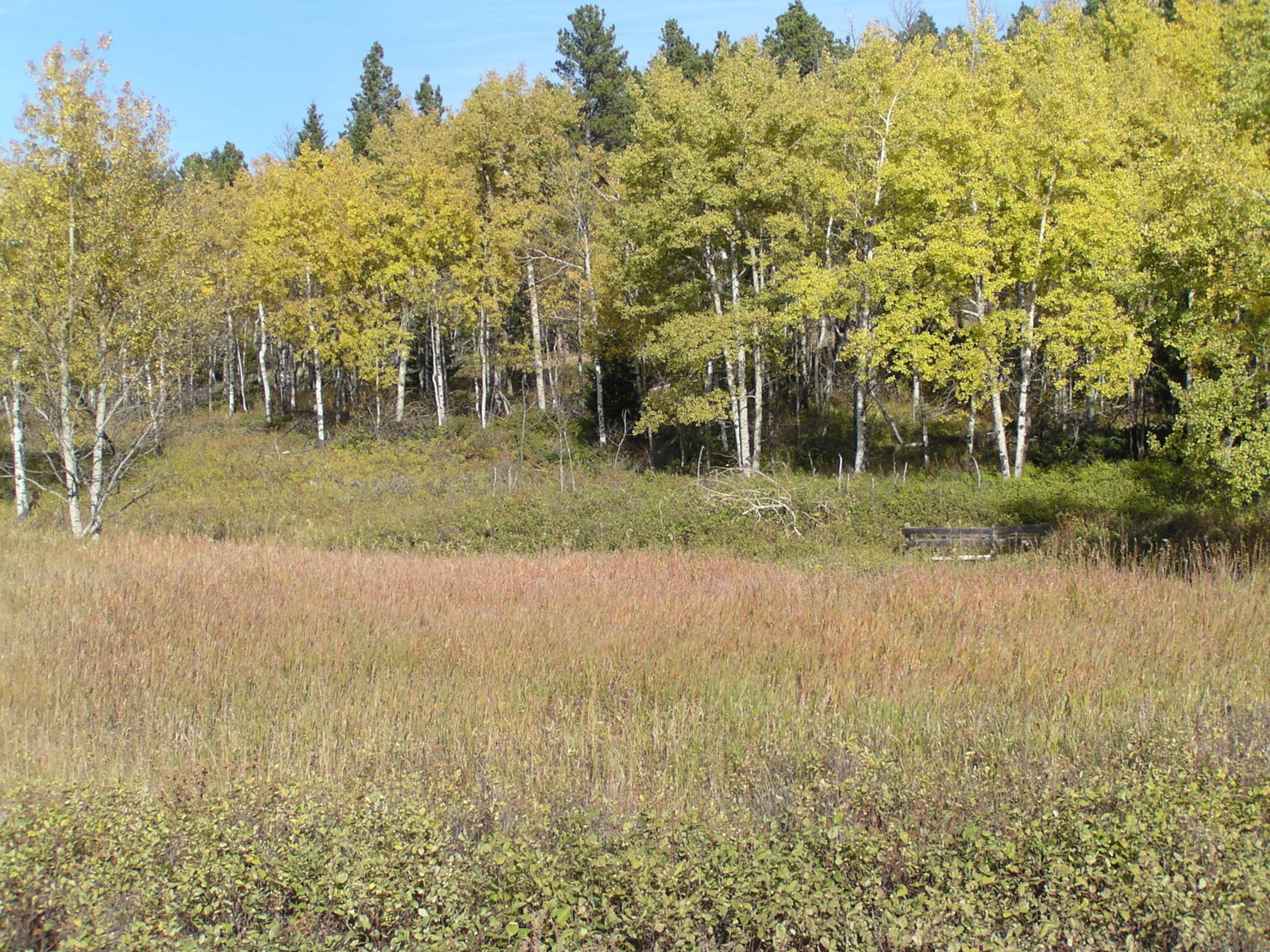Prime Montana Hunting Acreage on Swimming Woman Creek
