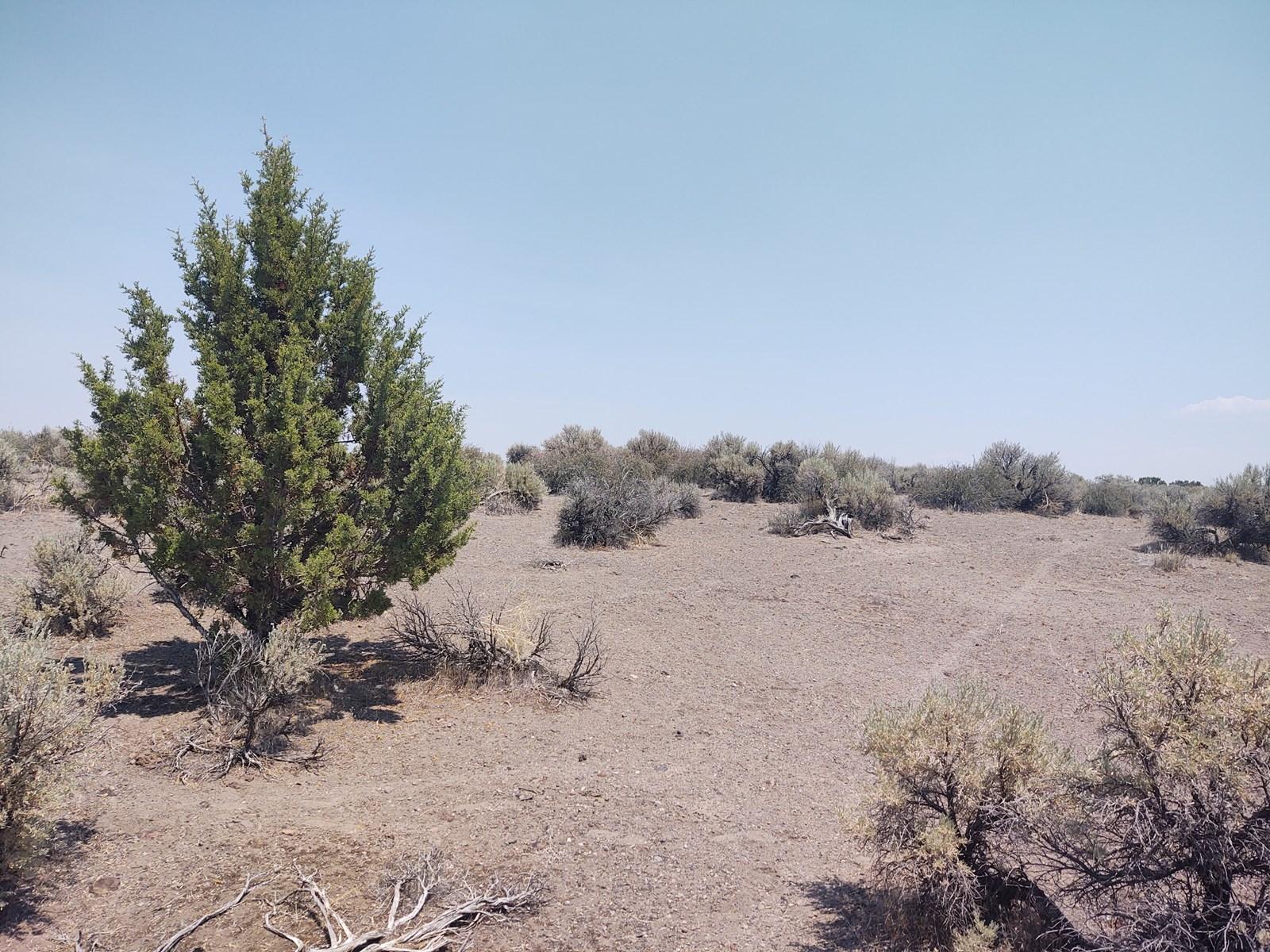 California Pines Lake Unit 1-A Modoc County +/-1 Acre