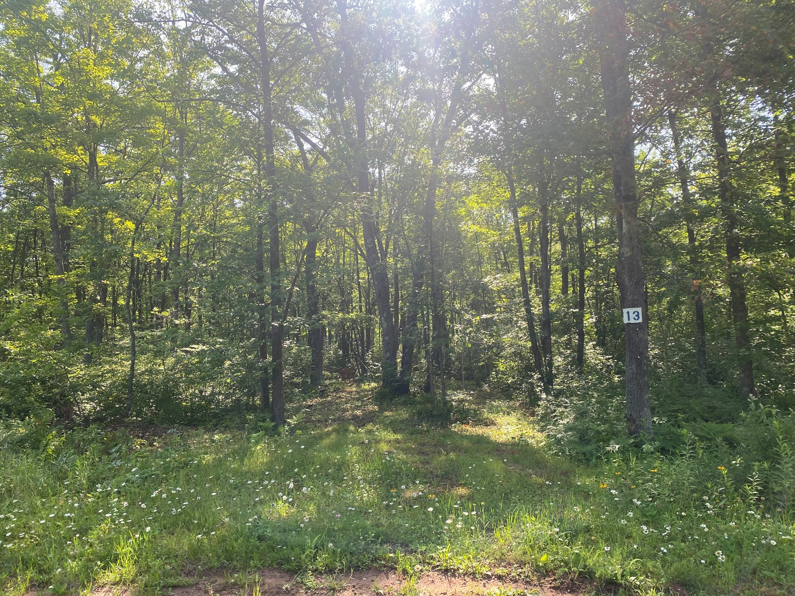 Ready-To-Build 1.5 Acre Lot For Sale In Sandstone MN