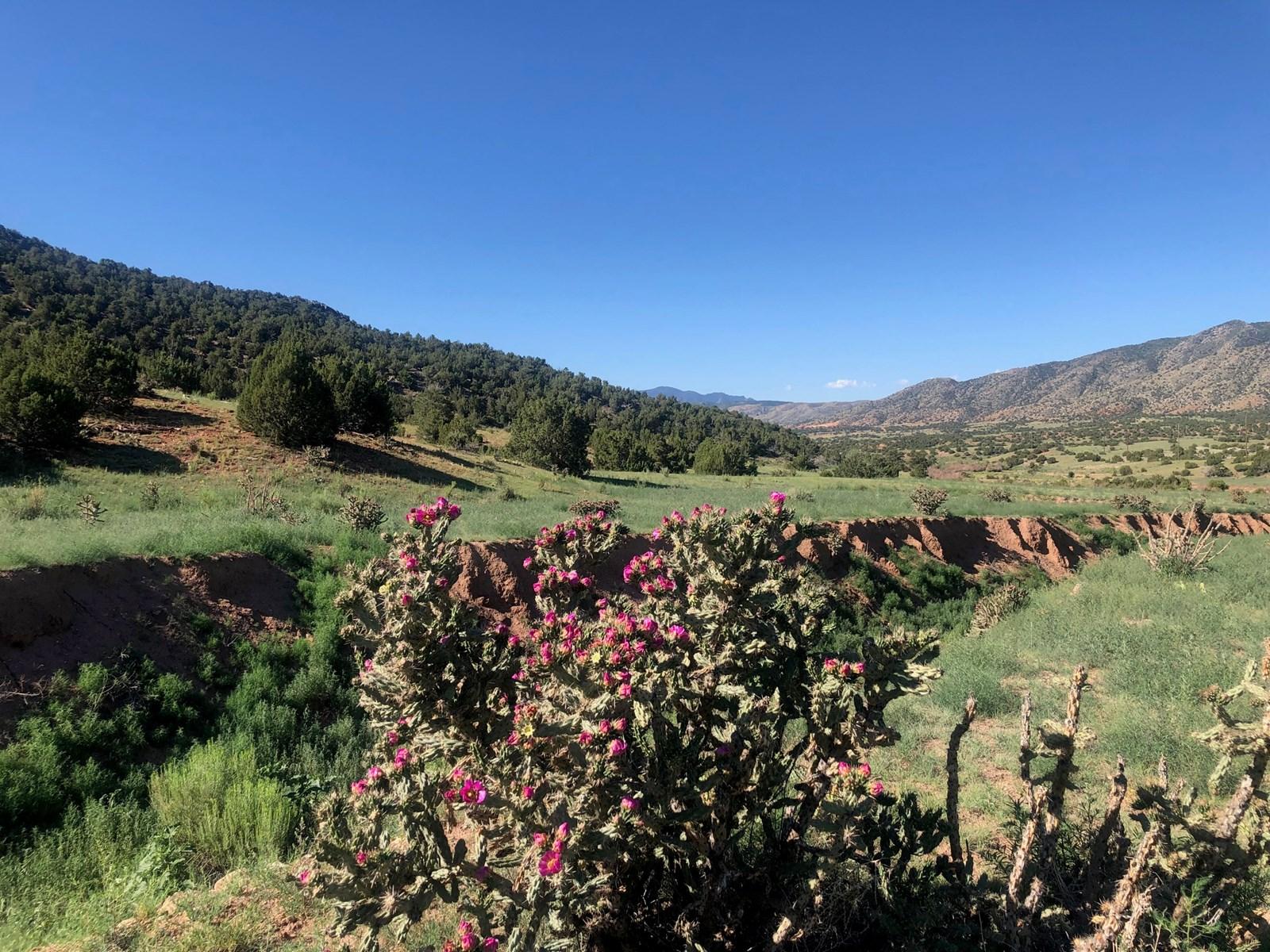 66 Acres Bordering BLM on County Road Canon City Colorado