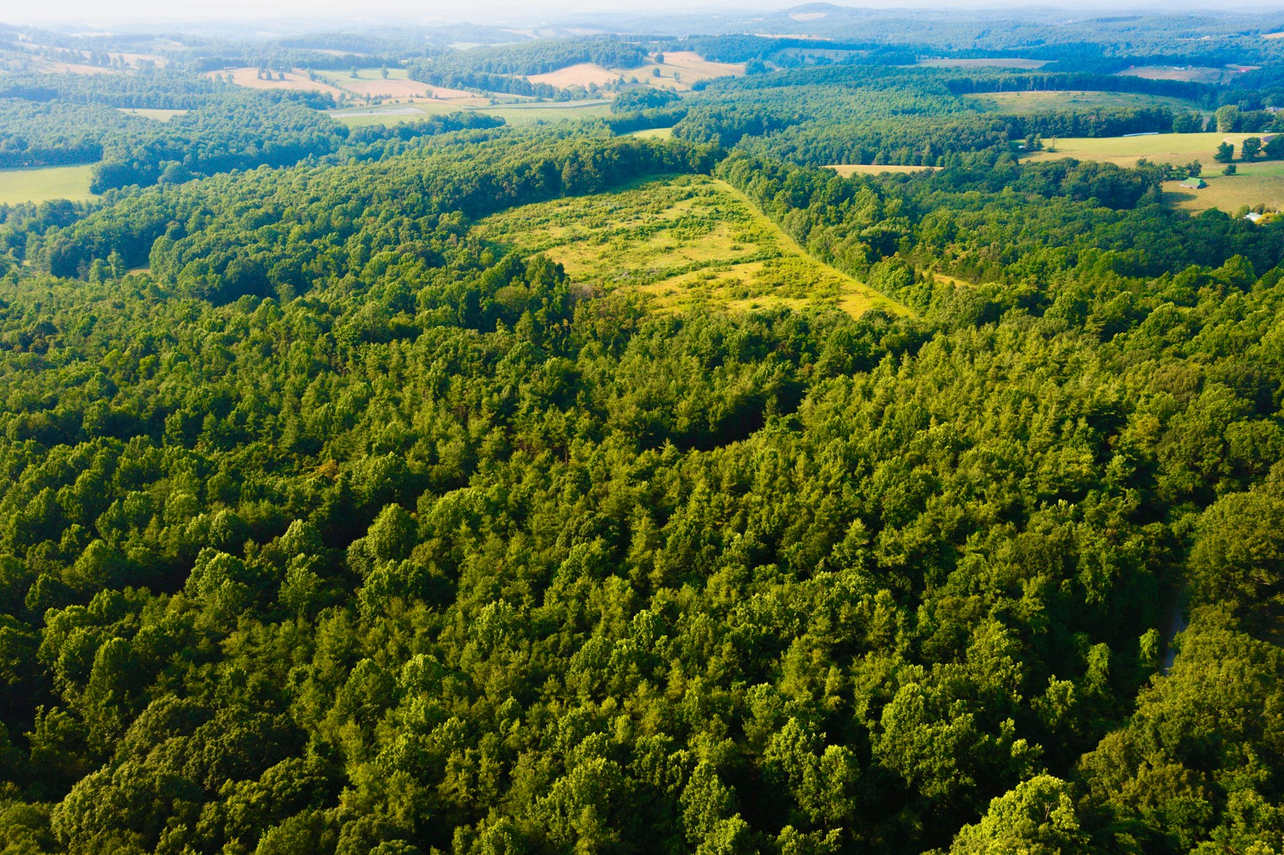 Wooded Property for Sale Near the Blue Ridge Parkway