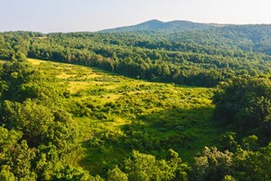 LARGE ACREAGE TRACT FOR SALE NEAR BLUE RIDGE PARKWAY