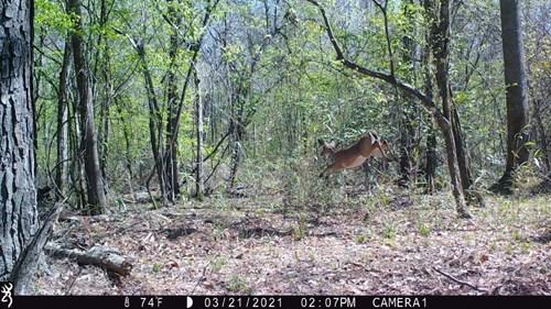 Texas Hunting Land for Sale Corrigan Polk Co Duck Deer Hogs