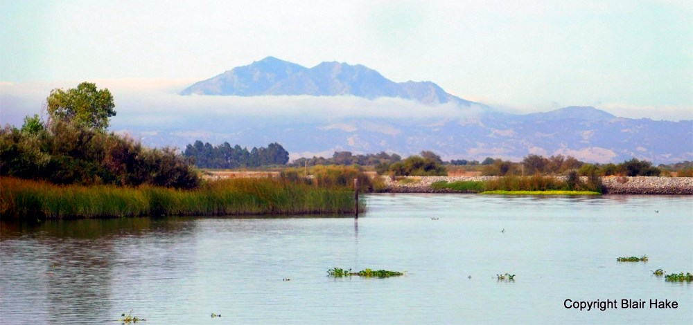 Colusa County Hunting Land Sold