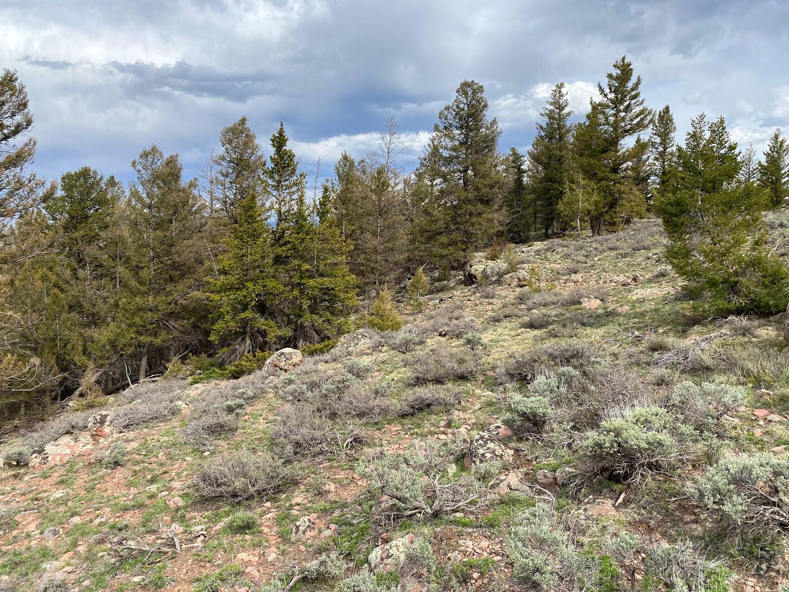 Colorado mountain land for summer retreat, RV parking