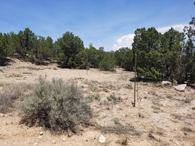 Wooded Lot on Land For Sale in Santa Fe County, New Mexico