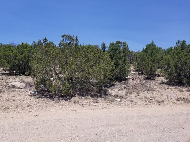 Treed Lot with All Utilities Close to Pavement in Edgewood!