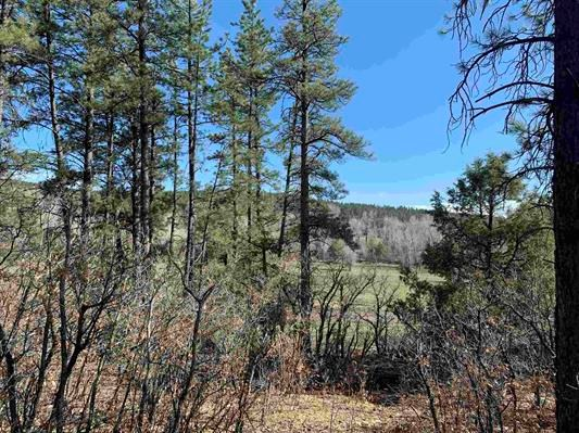 Mountain Property near Chama NM in  Canones Creek Valley