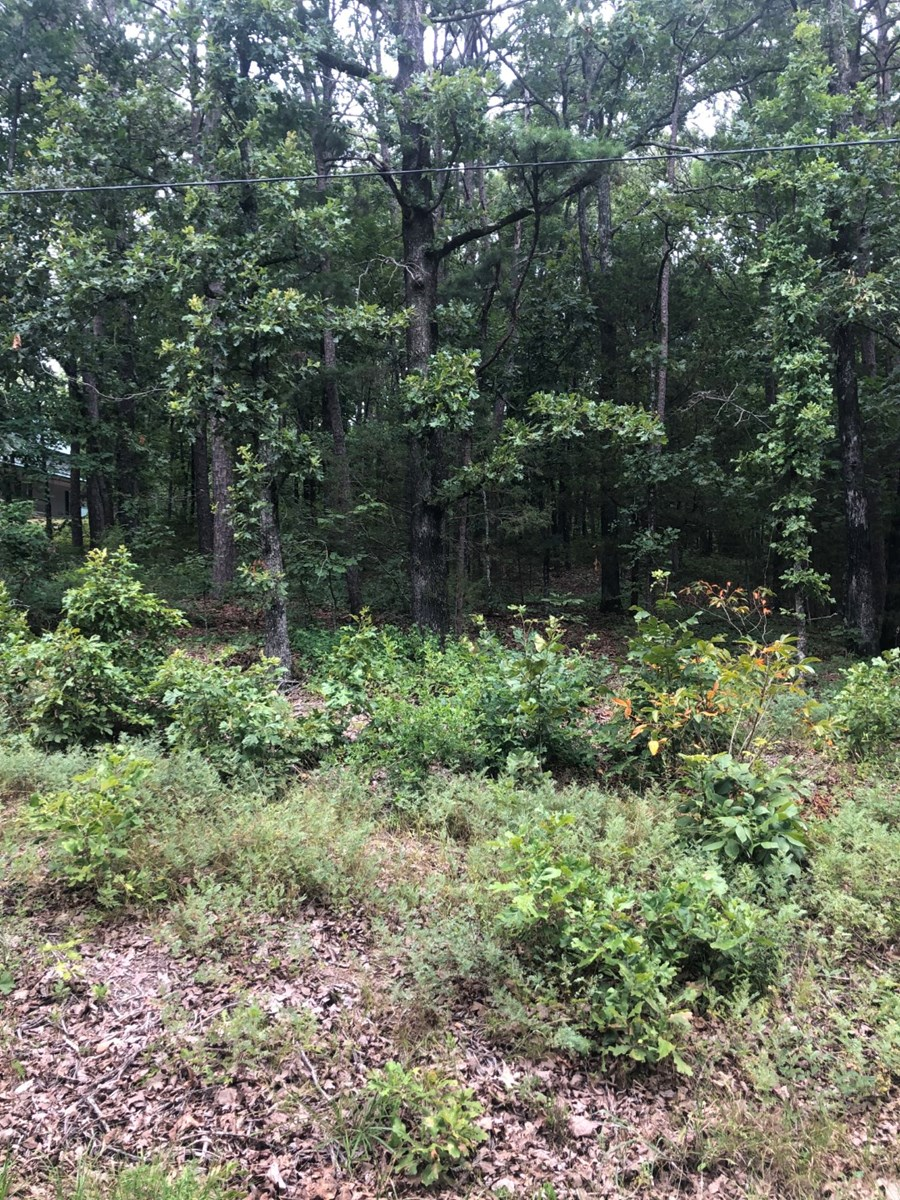 Lot For Sale Greers Ferry Lake Arkansas
