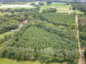 6.4 +/- ACRES FOR SALE IN SLOCOMB AL