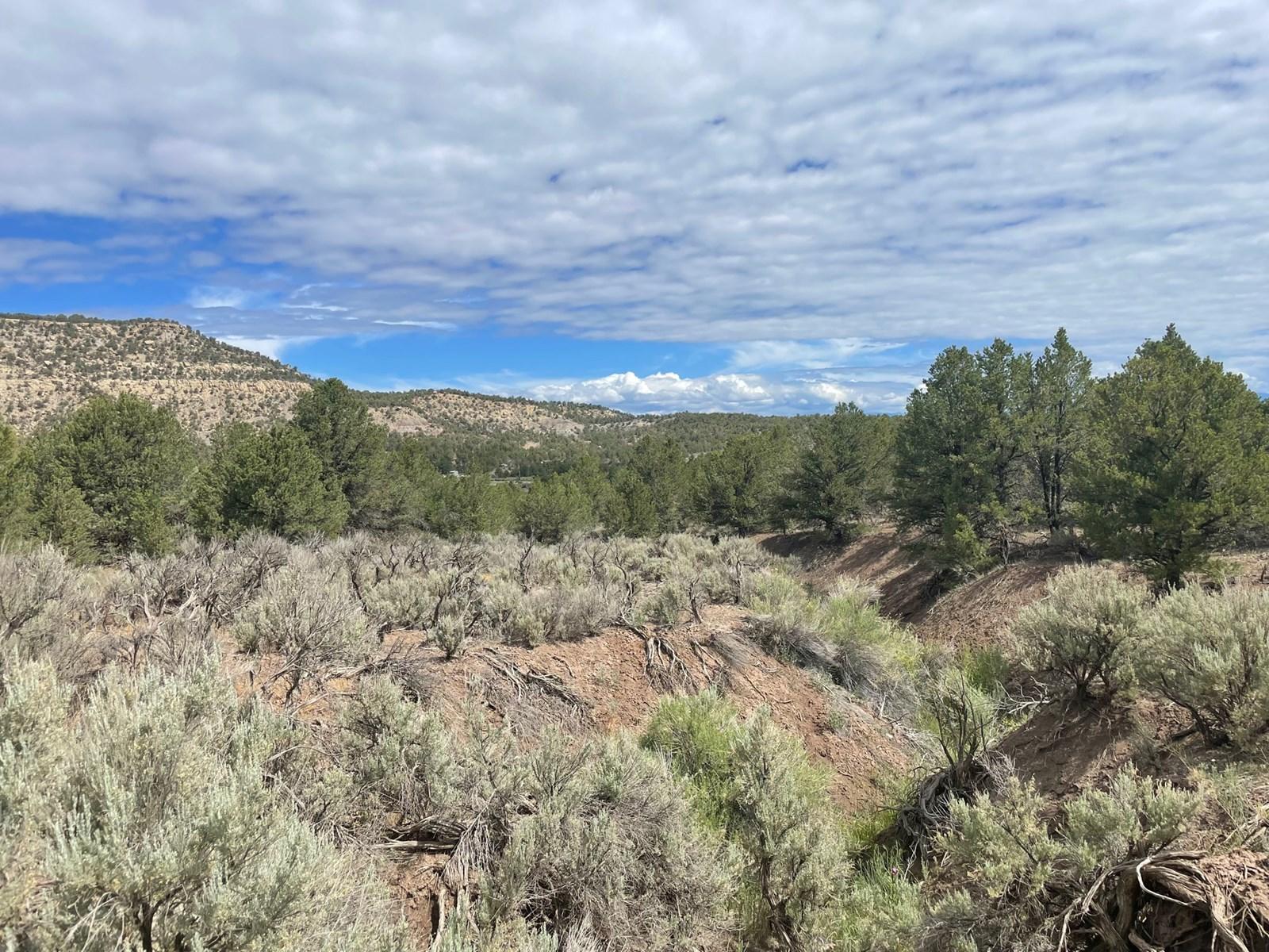 Off Grid Land For Sale in Ignacio, Colorado!