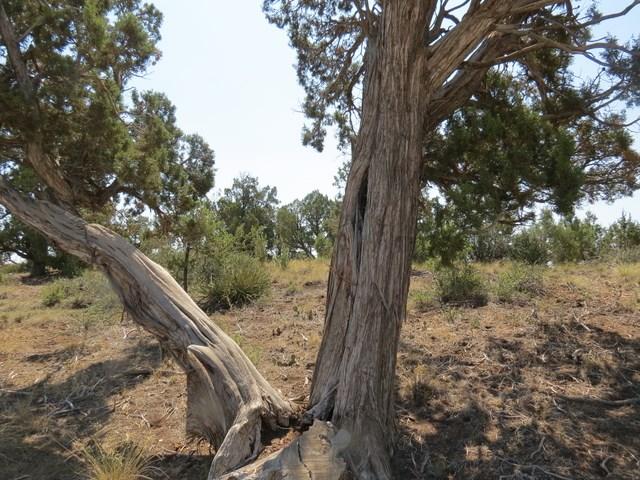 Pinon Hills Acreage For Sale in Dolores, Colorado!
