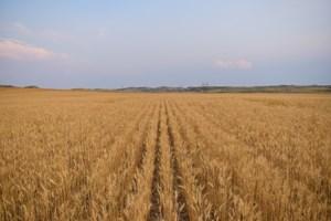ROCK CREEK MONTANA GRAIN FARM FOR SALE IN NORTHEAST MONTANA