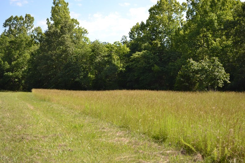 Hunting Ranch for Sale in Howell County, MO