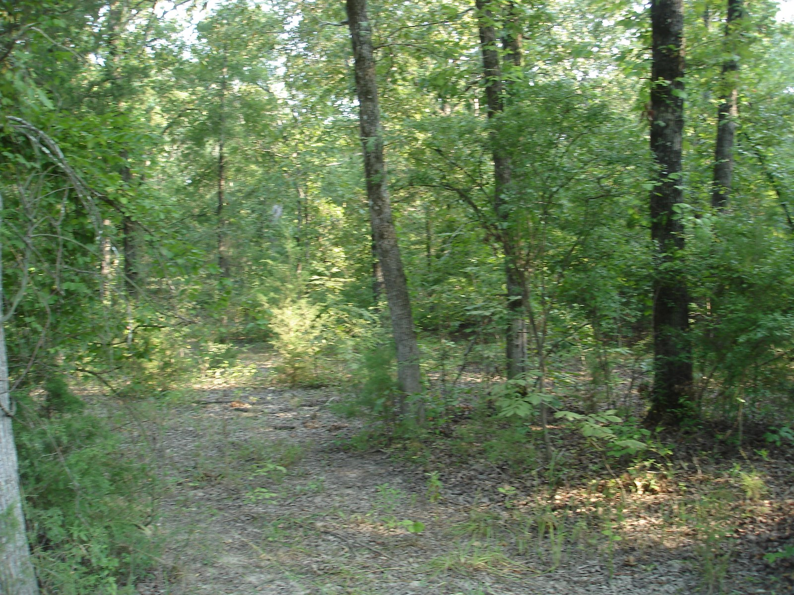 Recreational Land For Sale Detroit Texas Red River County