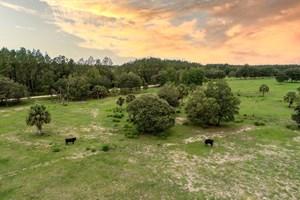 FLORIDA LAND FOR SALE ON COAST