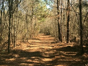 22 ACRES LAND FOR SALE HATTIESBURG, FORREST COUNTY, MS
