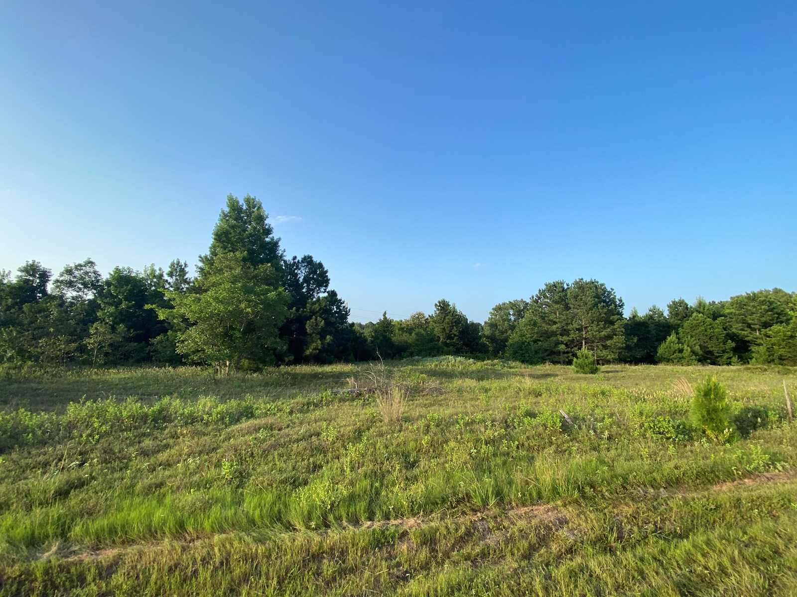 Country Land For Sale, Harrison County, Harleton, TX