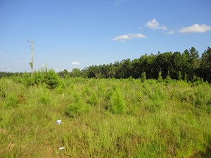 WATERFRONT PROPERTY FOR SALE LINCOLN COUNTY BROOKHAVEN MS