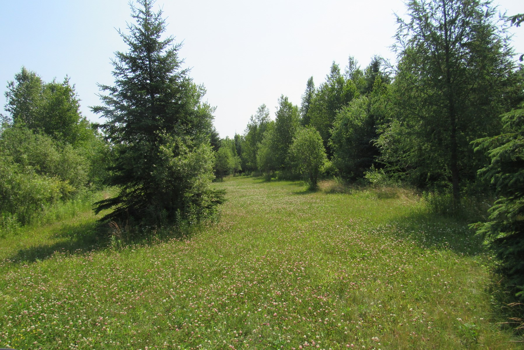 Over 150 Acres of Hunting Land For Sale Near Barnum, MN