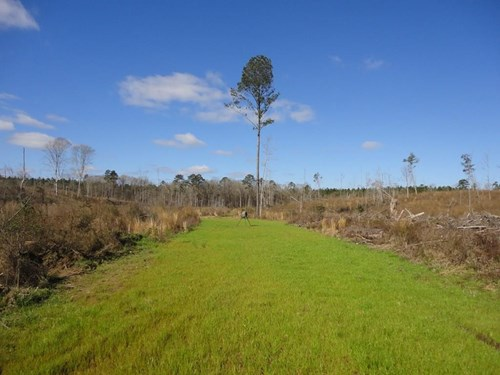 Hunting Land For Sale Lincoln County Brookhaven Mississippi
