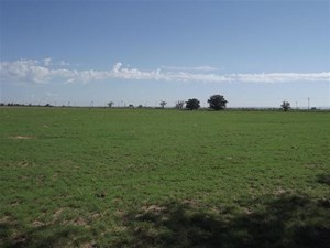 20± ACRES OF FARMLAND FOR SALE IN ESTANCIA, NM WITH WATER!