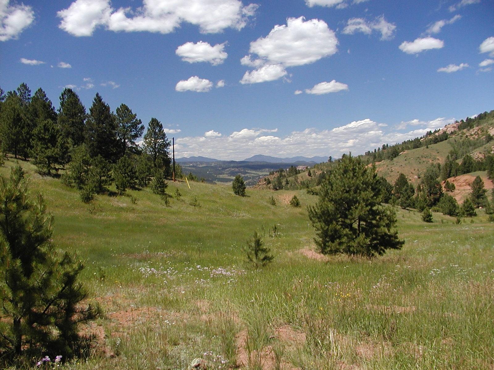 40 ACRES NEAR CRIPPLE CREEK COLORADO WITH POND & COUNTY ROAD