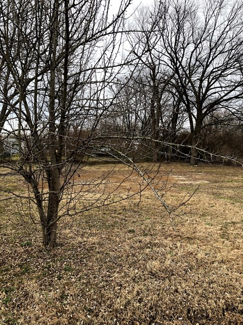 LOT FOR SALE IN SALLISAW OK