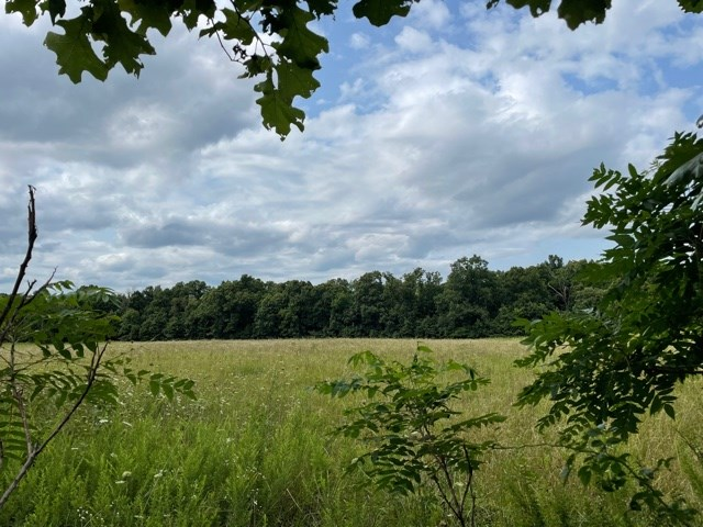 Land For Sale in Everton, Mo