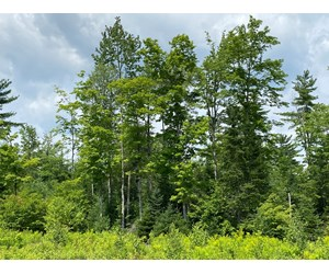 Maine Waterfront Timberland For Sale