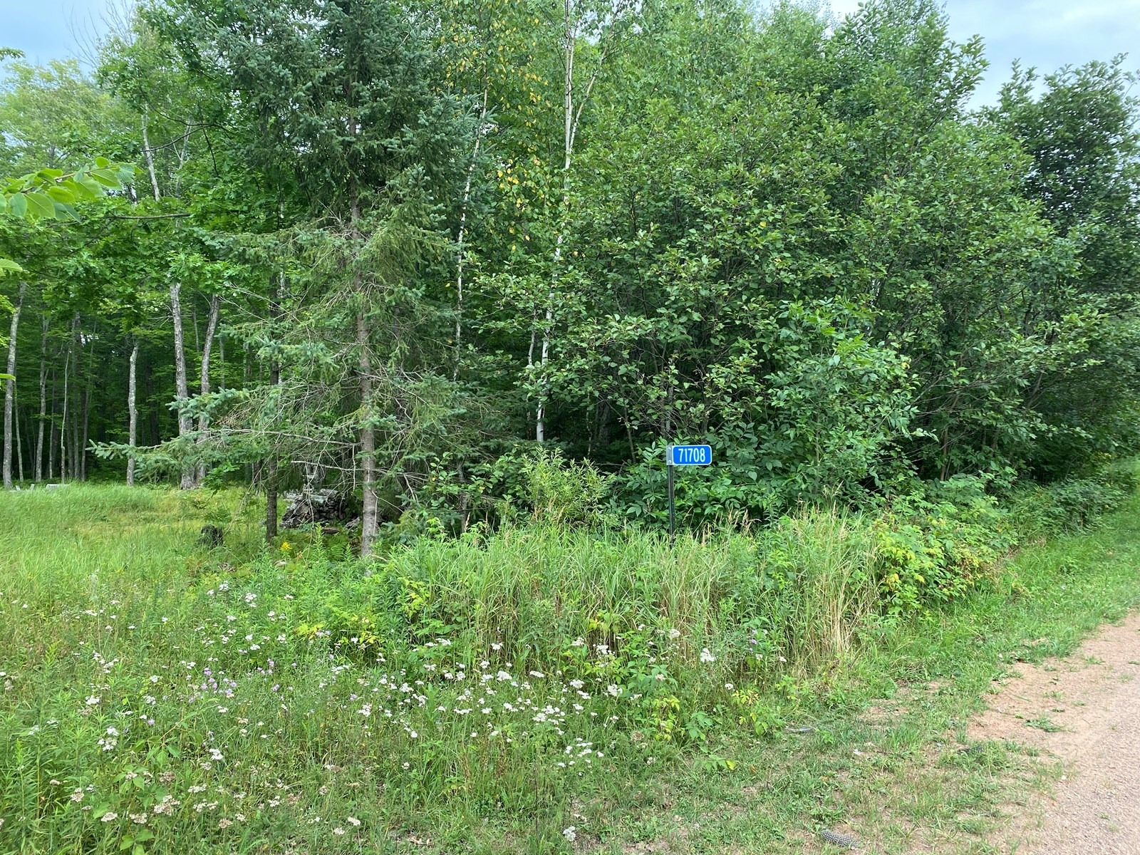 Beautiful Wooded 2.5+ Acre Lot For Sale On Rhine Creek