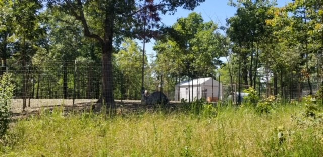 Acreage in Arkansas Ozark Mountain Property For Sale