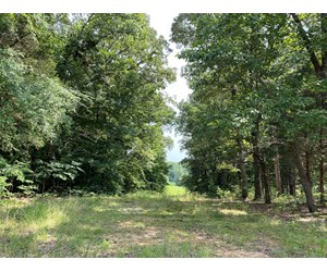 LAND FOR SALE IN TN, BUILDING SITES, WOODED, NO RESTRICTIONS