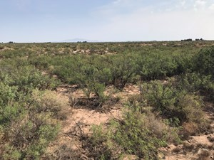 LAND FOR SALE DEMING NM