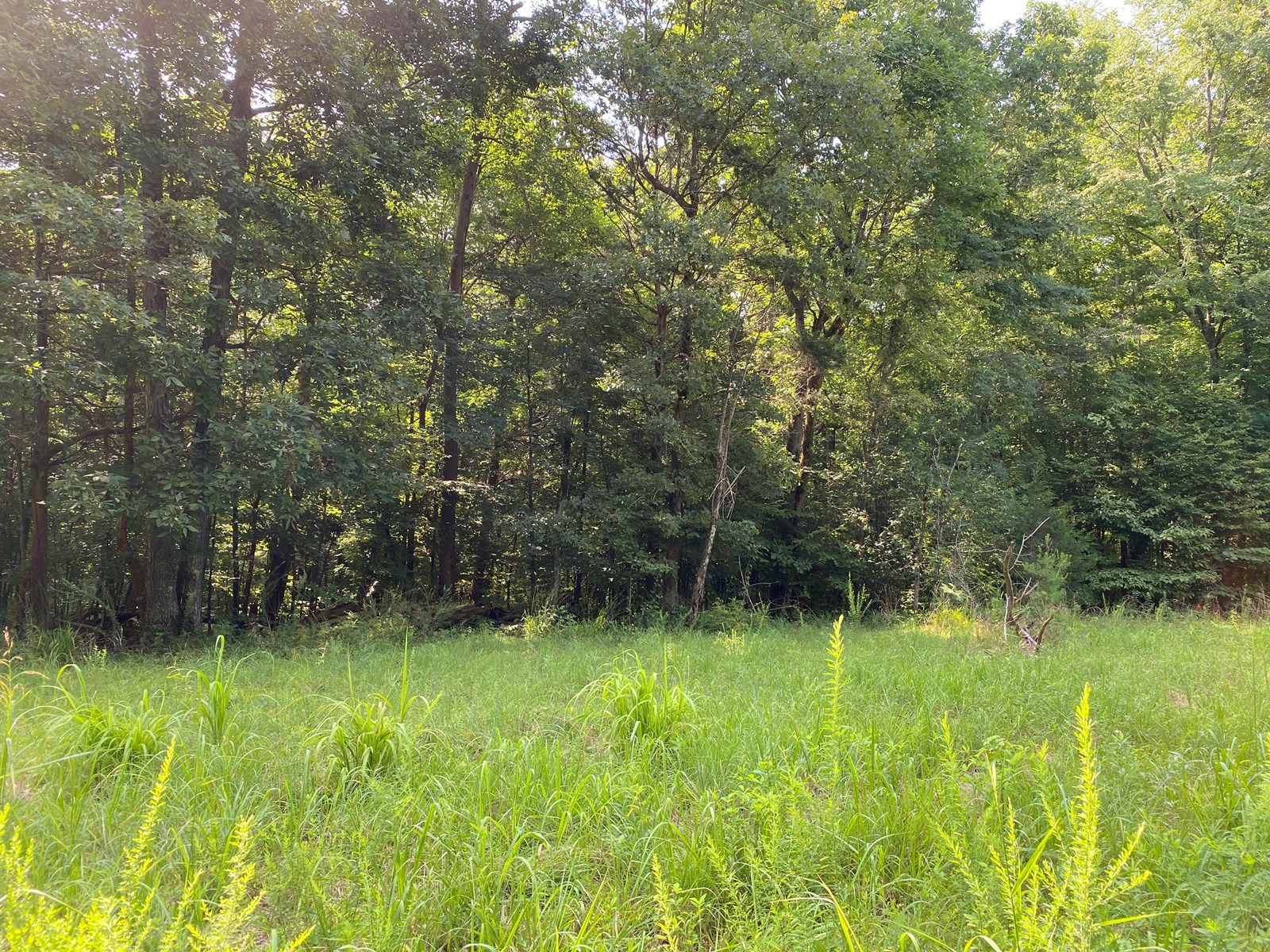 2 ACRES OF LAND FOR SALE IN TN, NICE BUILDING SITE, WOODED