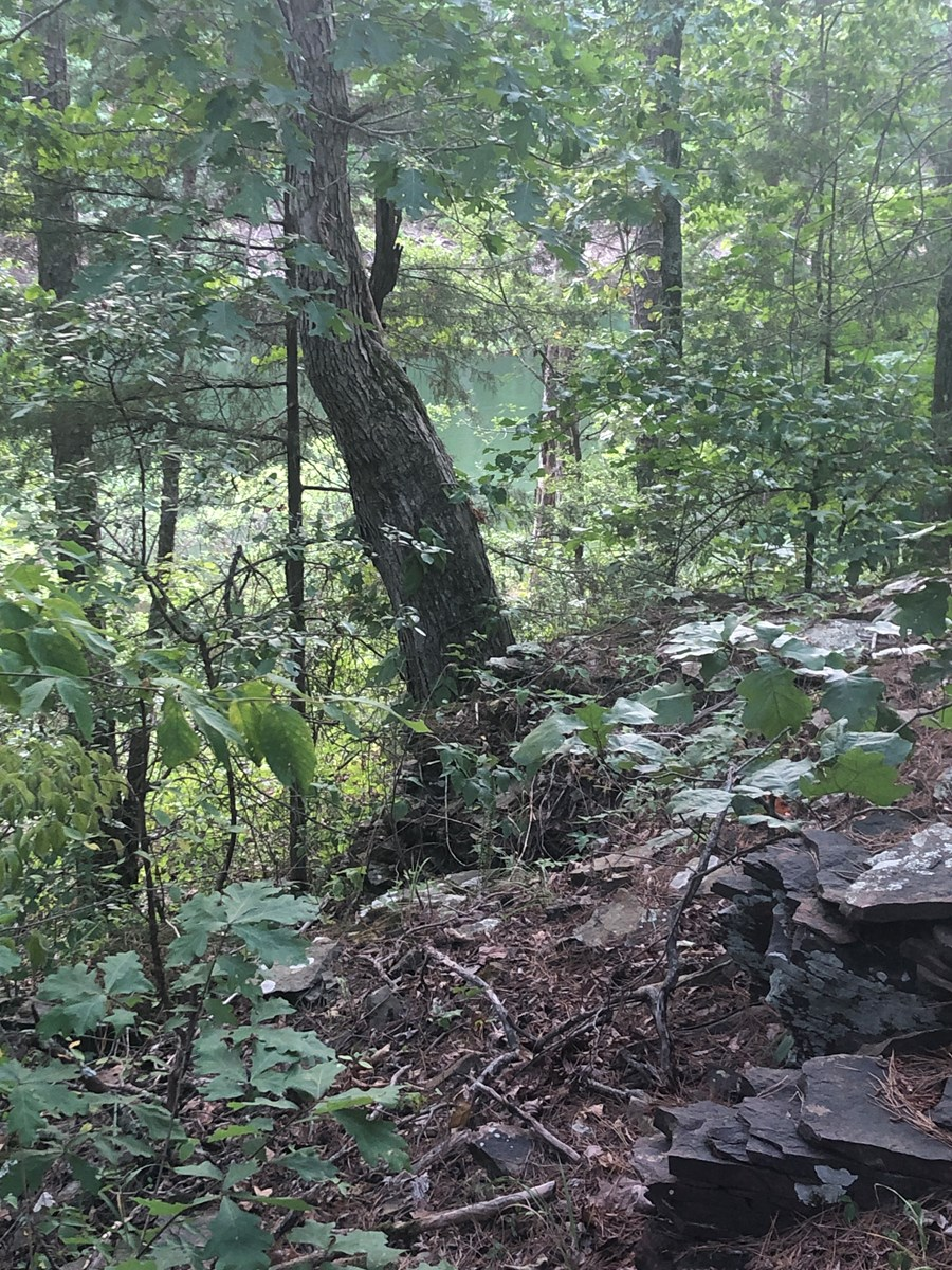 Greers Ferry Lake Lot with Frontage and Views
