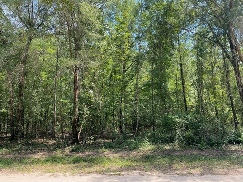 Buildable Lot in North Florida