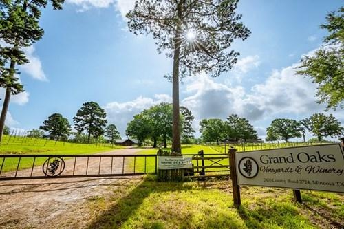 Beautiful Grand Oaks Vineyards & Winery in East Texas