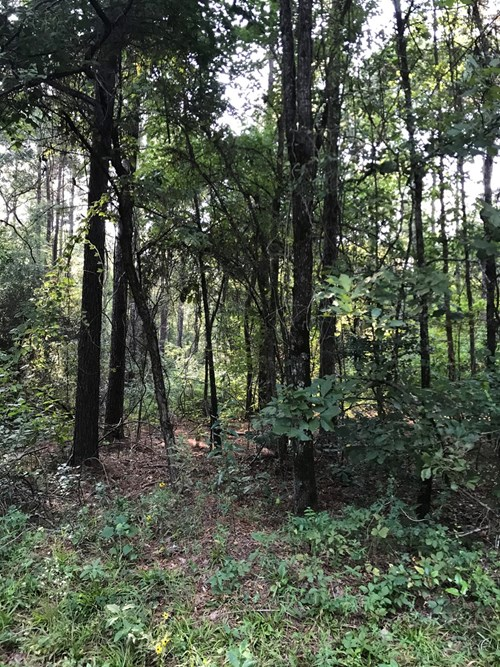 East Texas Timberland and Hunting Property
