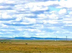 WORKING CATTLE RANCH FOR SALE WITH HOMESITE, CRP AND HUNTING