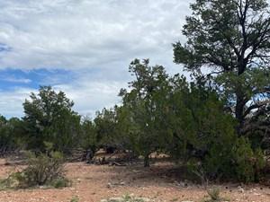RURAL LAND FOR SALE IN SELIGMAN AZ, NO HOA