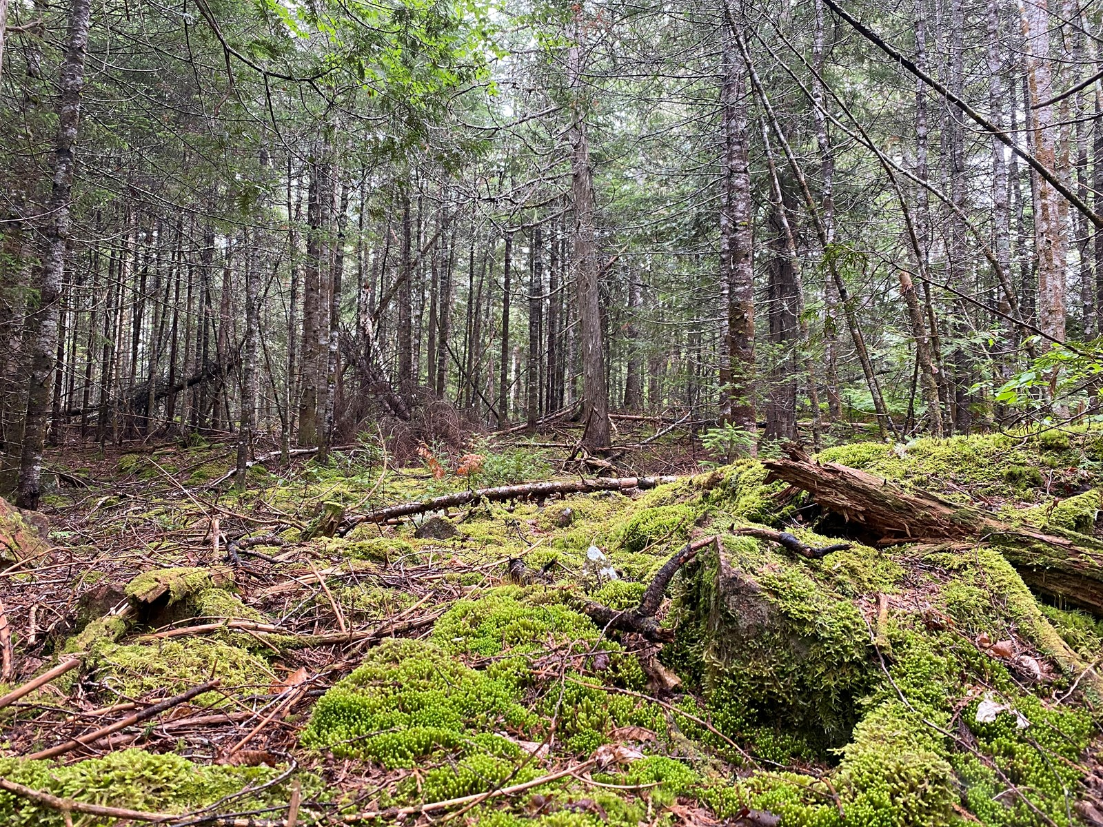 Land for sale in Robbinston, Maine